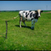 Atom Heart Mother … no prawie ;-)